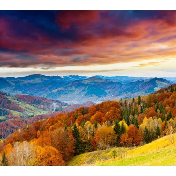 Осень золатая