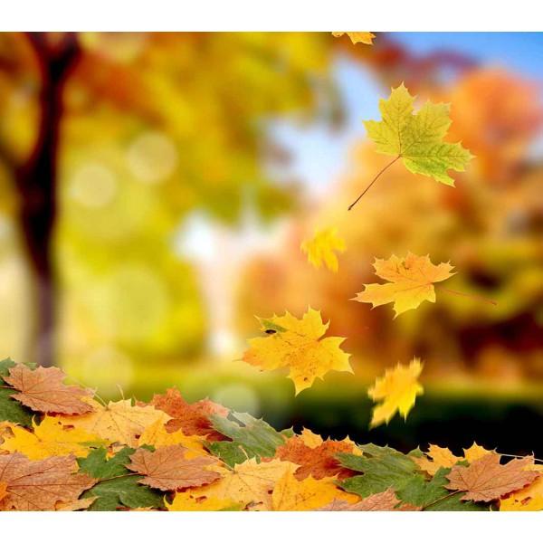 Осений листопад