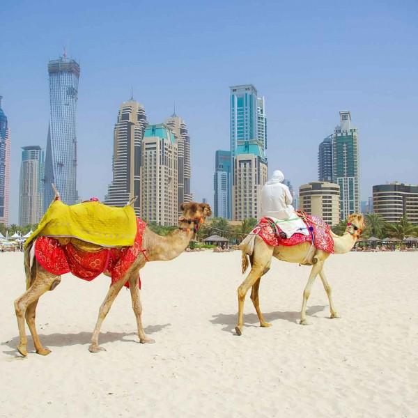 Верблюды на пляже
